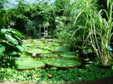 010 tropical aquatic house.JPG