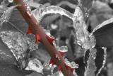 web---frosted-rose-stem.jpg