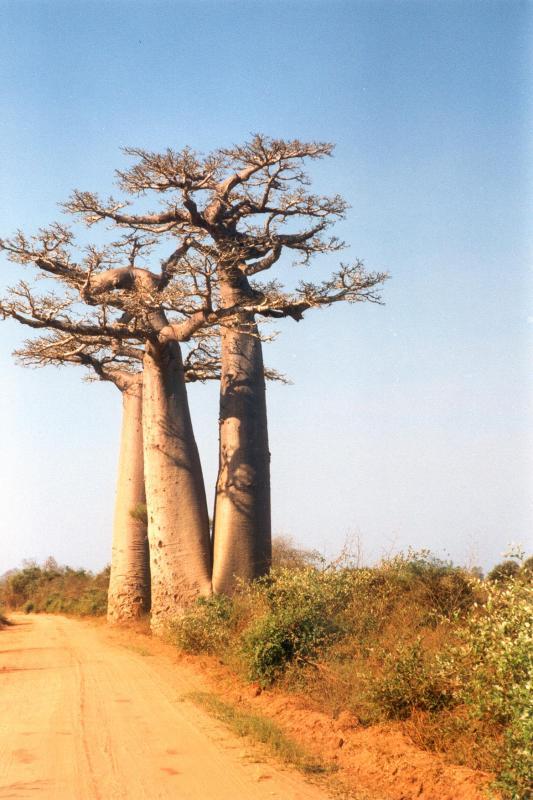 road and baobab.jpg