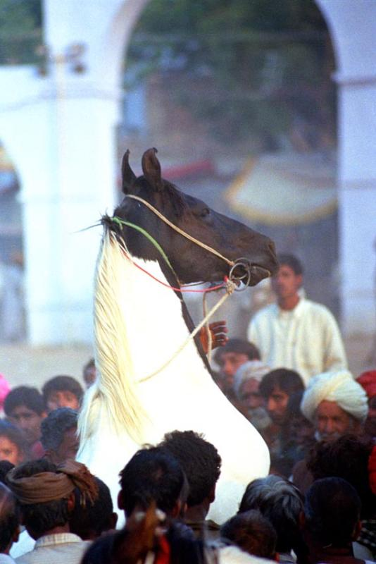 horse dressure, Vagabond Magazine
