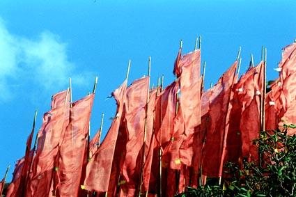 forest of prayer flags.jpg