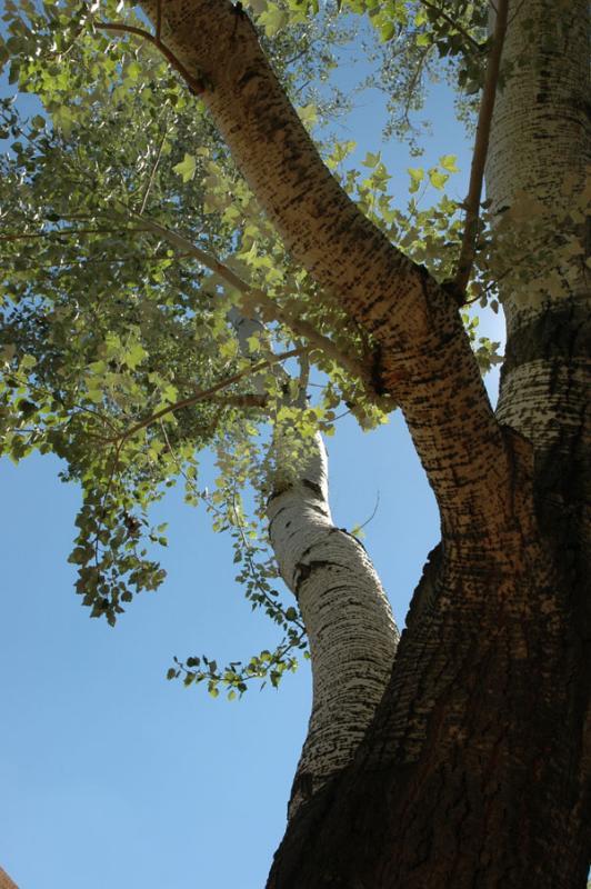 zootree DSC_0136.jpg