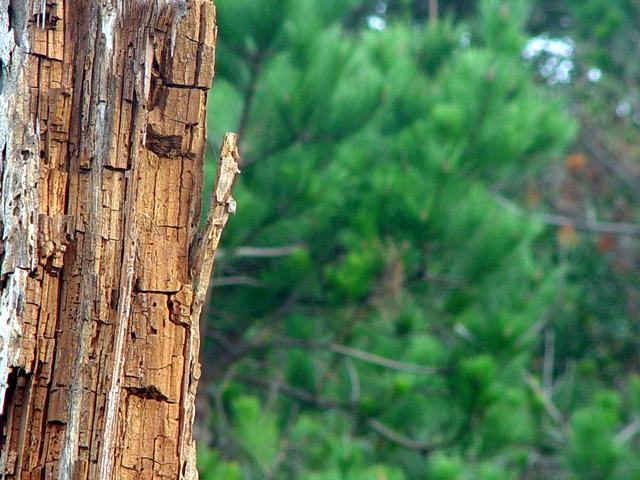 Asilomar Woodlands