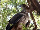 Falcon. The Dubai Zoo is small and the animals live mostly in small cages.