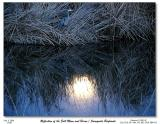 Reflection of the Full Moon and Blue Heron