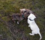 Puppy Run February 2005