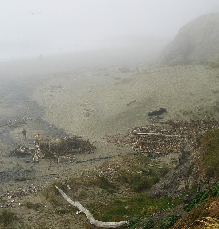 Misty coast, North California