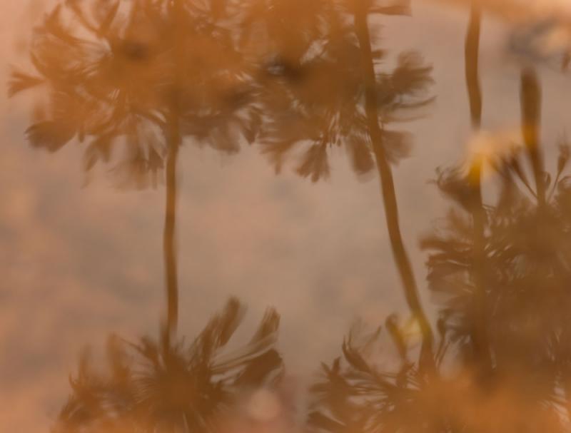 <b>Bird Bath</b><br>by<br>toc (Tim OConnor)