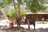Rural School