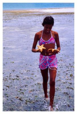 estrella de mar #3