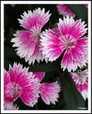 10/12/04 - Toujours Fleurs