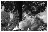 9/30/04 - Fall Shroom (B&W)