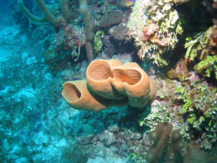 Belize0052.jpg