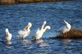 Bolsa Chica Wetlands. Huntington Beach Ca.