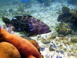 10 meter reef 105a