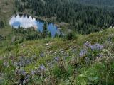 Wildflowers and Lake