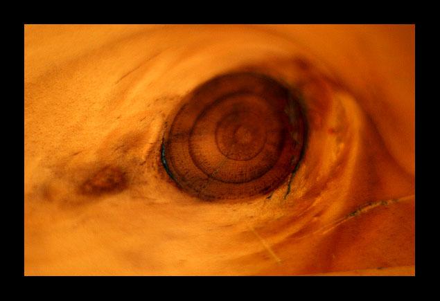 El ojo de la ballena