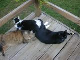 Tuesday October 12, 2004 - All cats on deck.
