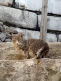 Ruins cat