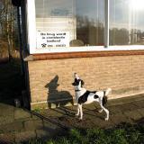 Joop's Dog Log - Wednesday Feb 04 (2)