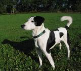 Joop's Dog Log - Thursday October 14