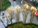 LaGuardia Place Gardens - Impressionistic Photography