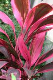 Foliage - Various or Unknown