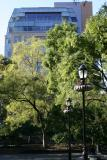 NYU Student Affairs Building with Japanese Pagoda Trees