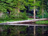 Uintah Lake Log Reflection