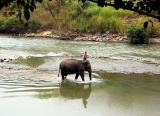Elephant wadding in the Pai River