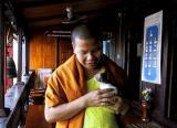 Monk with kitten