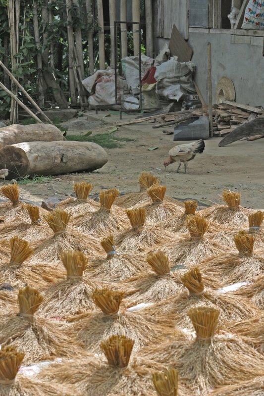 bundles of upland rice drying