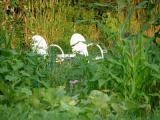 Annie's Garden Chairs