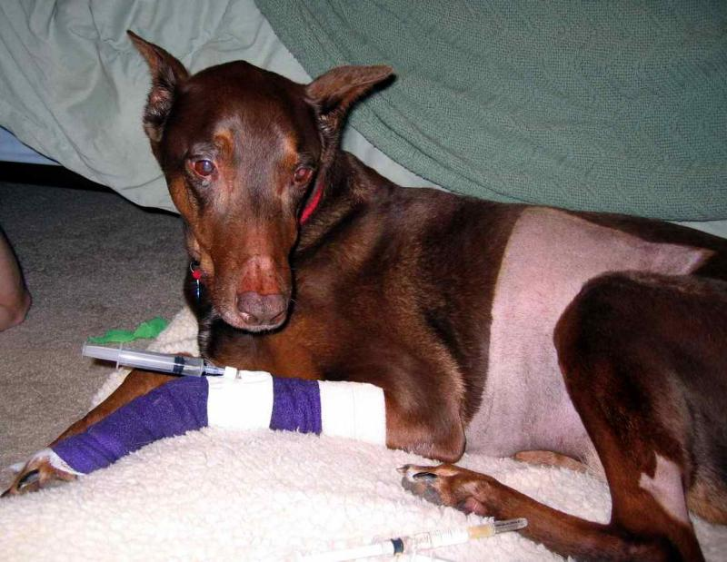 Natasha when she was sick with kidney failure.  We nursed her back to full health.  She was always there for me....