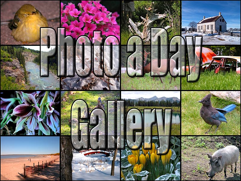 Photo a  Day (PAD) Gallery
