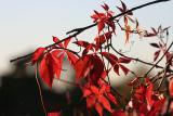 Oct 12: Fall colurs