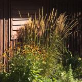 Cottage Flora