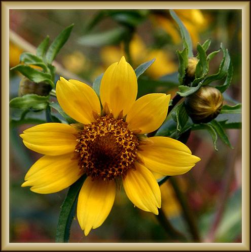 Wild Flower at Lackawanna State Park