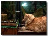 1604-fishroom-cats.jpg