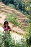 Girl Amongst Rice Terraces, Siruwari Balami Gau
