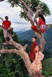 People-Tree Hangout, Siruwari