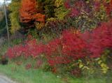Blur of sumac.jpg(168)