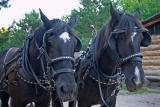 {Q-E}T3807 Log Horses.jpg