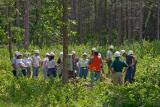 {Q-E}T3837 Lesson in Logging.jpg