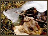 March 8 - Receding Glacier