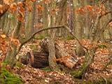 Winter Wood 2