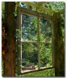 10 19 03  looking thru glass into garden  Minolta A1.jpg