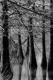 03 15 03 swamp, hemphill, tx. sony 717.jpg