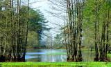03 17 03 swamp, sony 717.jpg