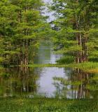 05 03 030 swamp, 10D canon.jpg